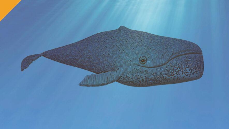 największa liczba wielorybów bitcoin w historii
