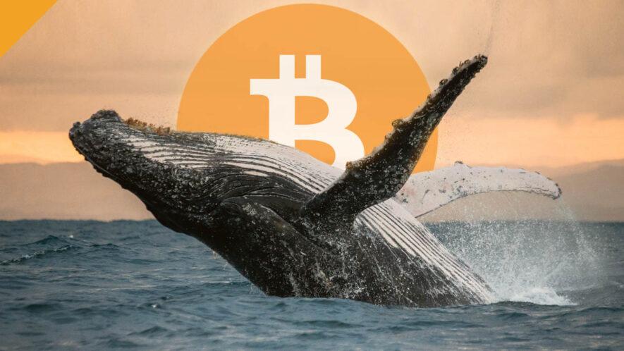 Wieloryby BTC gromadzą bitcoiny
